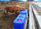 Contiuous Flow  Automatic Plastic Cattle Drinking Troughs For Drinking Trough Rotomolding